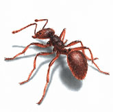 Pinellas pest control ants